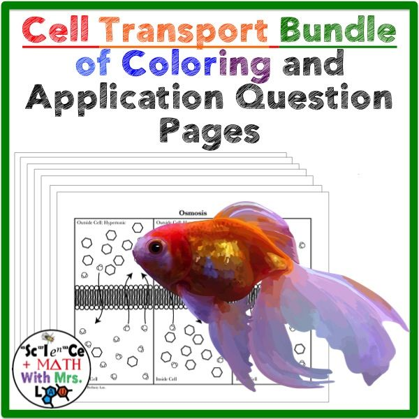 Worksheets Facilitated Diffusion Worksheet Answers 17 best images about biology cell membrane osmosis diffusion on transport coloring activities for high school biology