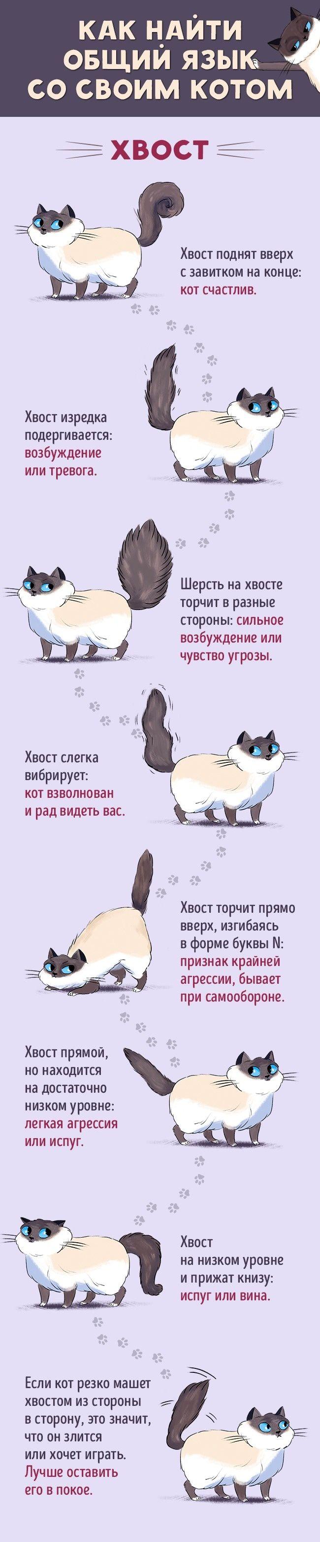 Как найти общий язык сосвоим котом
