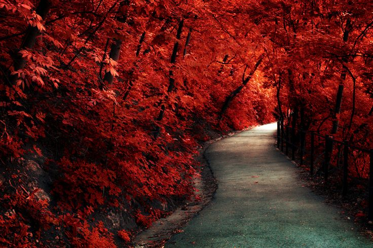 凄い紅葉です。