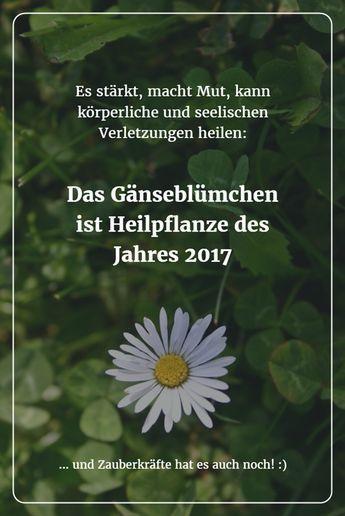 Klein, aber fein: Das Gänseblümchen (Heilpflanze des Jahres 2017) sollte man nicht unterschätzen! Es stärkt, macht Mut, kann körperliche und seelische Verletzungen heilen.
