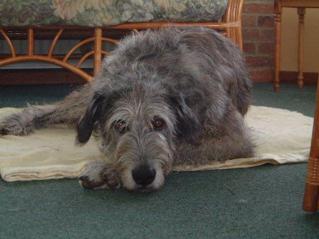Big Dog Rescue Penngrove