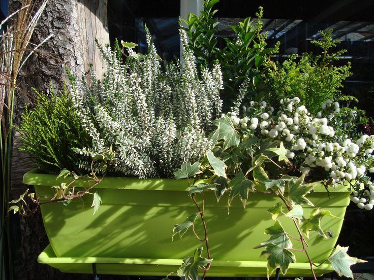 Les 30 meilleures images propos de jardini res d 39 hiver for Plante exterieur hiver ete