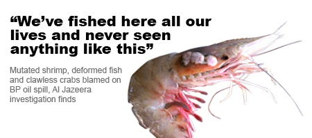Eyeless shrimp and fish with lesions are becoming common, with BP oil pollution believed to be the likely cause.Alarm Scientists, Seafood Deformed, Gulf Seafood, Deformed Alarm, Oil Pollution, Big Oil, Bp Oil, Crabsoil Spill, Al Jazeera