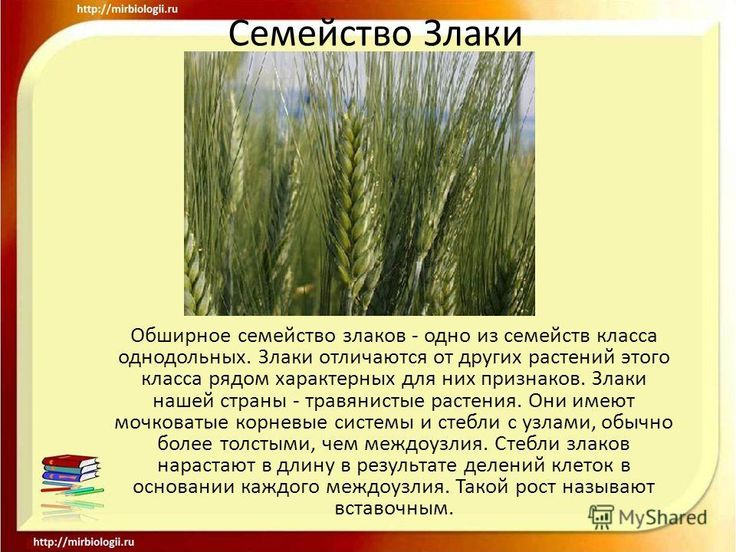 Гдз по истории 5 класс к учебнику данилов сизова кузнецов николаева