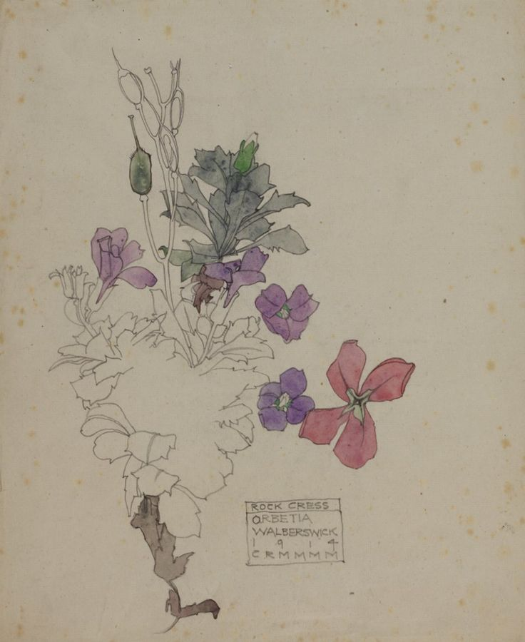 Charles Rennie Mackintosh, Aubretia, 1914