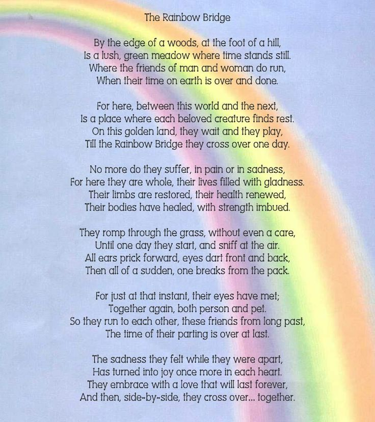 Breathe easy knowing that our beloved pets will meet us again, at The Rainbow Bridge <3