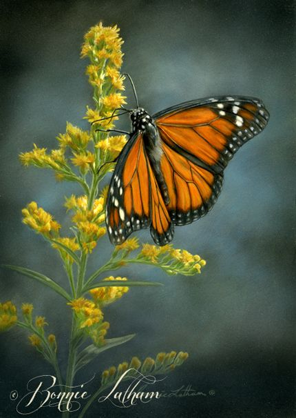 Monarch Butterfly Painting by Bonnie Latham - Wildlife ...
