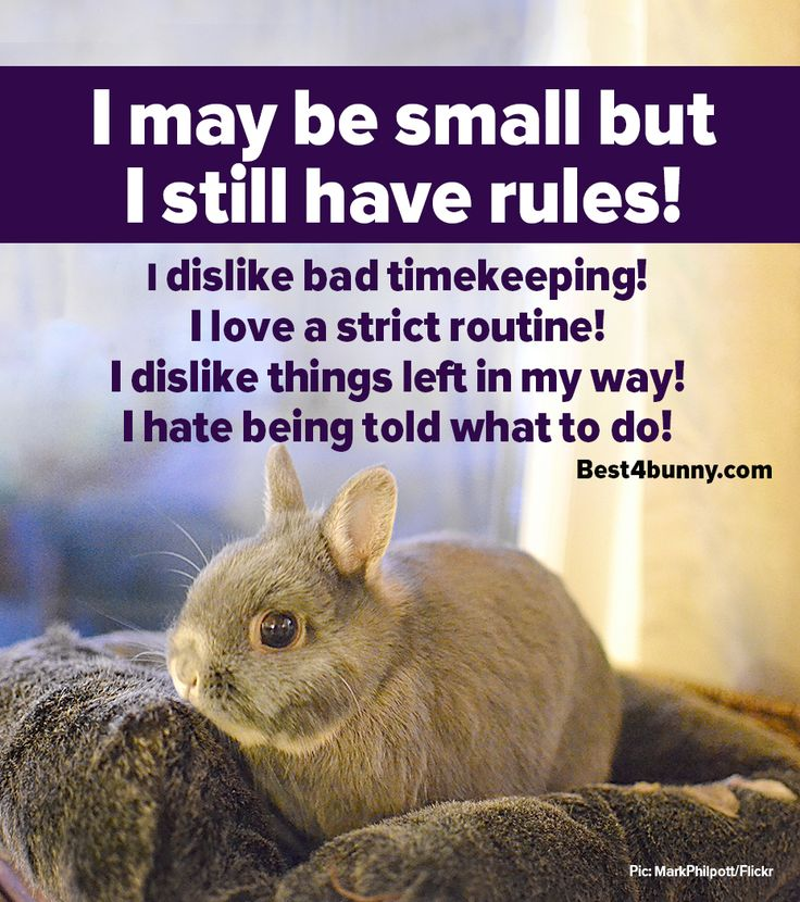 317 best images about Best4bunny posters on Pinterest ...