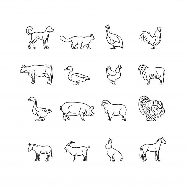 Farm Animals Thin Line Icons Set Outline Cow Pig Chicken Horse Rabbit Goat Donkey Sheep Geese Symbols Animal Outline Animal Doodles Animal Line Drawings
