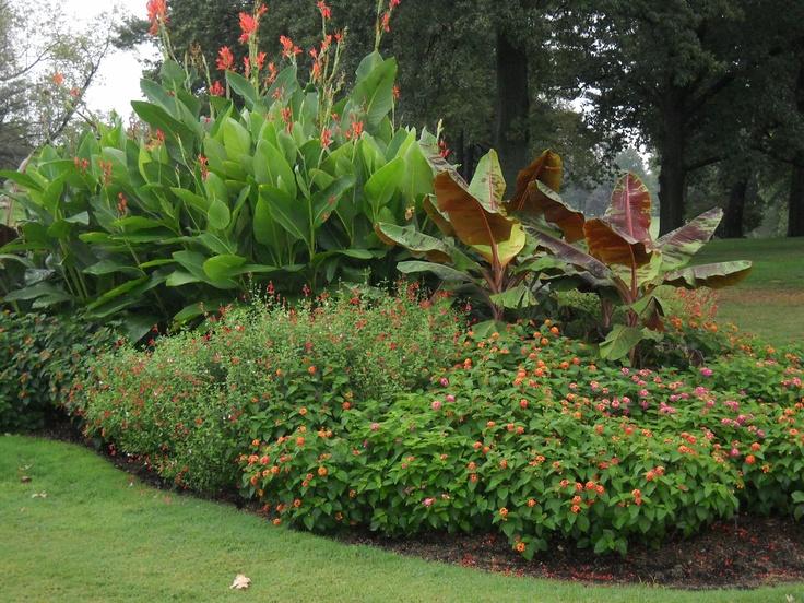 Mass planting of canna lilies landscape design ideas for New zealand garden designs ideas