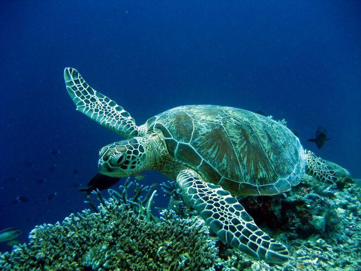 See sea turtles: go scuba diving in Marmaris, Turkey.