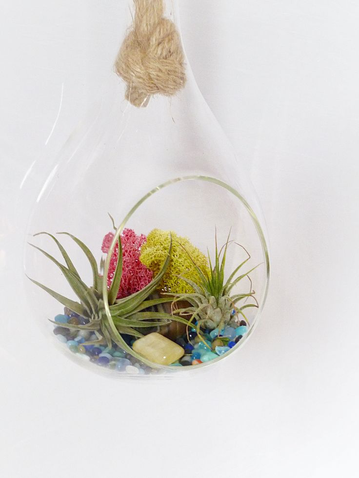 Cute Hanging Air Plant Terrarium Kit Made With Polished Sea Glass And  Fluffy Moss ||