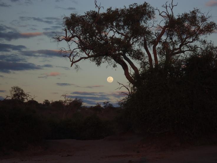 African Moon Nature/Animals :) Pinterest