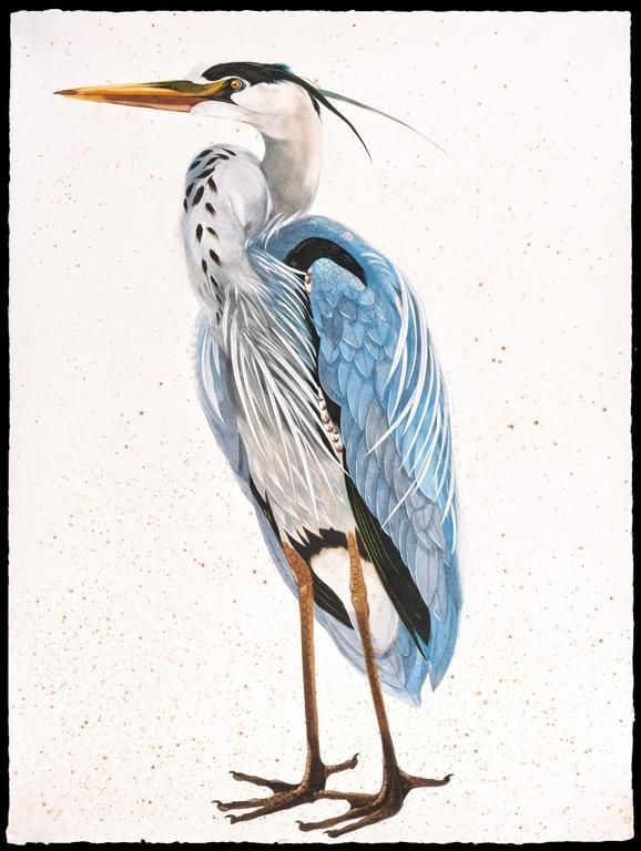 Scott Kelley - Great Blue Heron, facing left | 1stdibs.com
