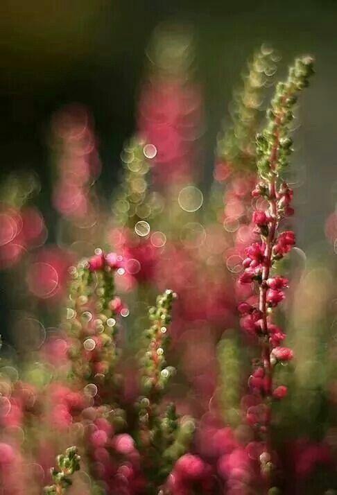 Pink Rose & Olive Green