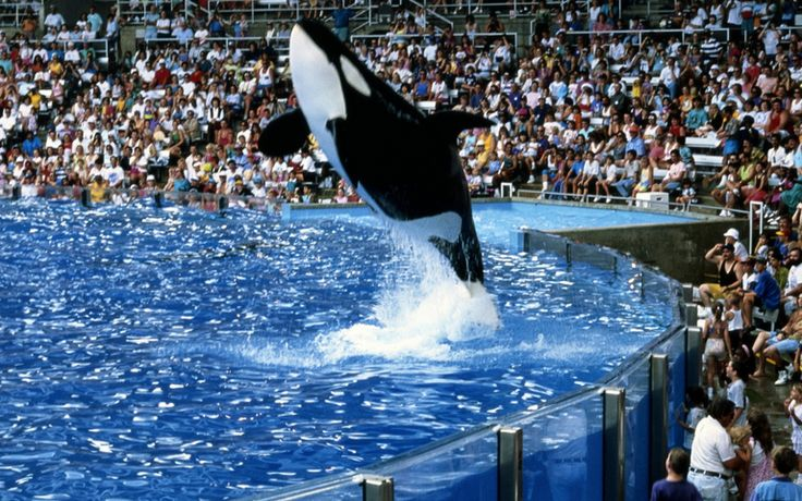 SeaWorld is a United States chain of marine mammal parks, oceanariums, and animal theme parks owned by SeaWorld Entertainment.More info visit: http://en.wikipedia.org/wiki/SeaWorld