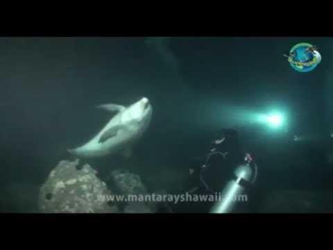 Delfin bittet Taucher um Hilfe - YouTube