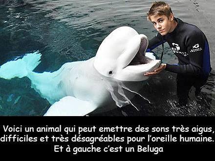 Un petit pic à Justin Bieber http://www.15heures.com/photos/petit-pic-justin-bieber-4777.html #LOL