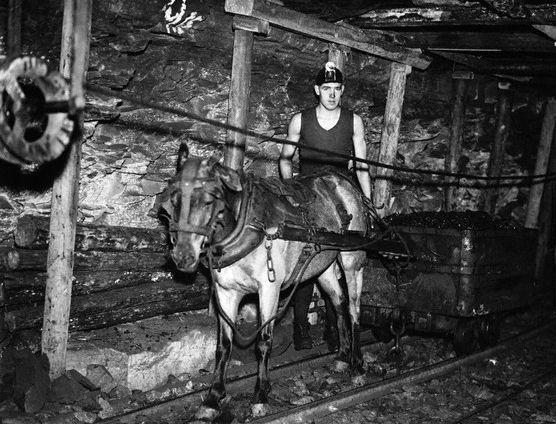 English-Mines-Pit pony & miner - Durham, England