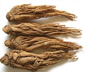 The dried root of A. sinensis is commonly known as Chinese angelica (simplified Chinese: 当归; traditional Chinese: 當歸; pinyin: dāngguī; Pe̍h-ōe-jī: t-kuiong) and is widely used in Chinese traditional medicine for women's health, cardiovascular conditions, inflammation, headache, infections, mild anemia, fatigue and high blood pressure despite a lack of clinical data and trials on using dong quai in human.