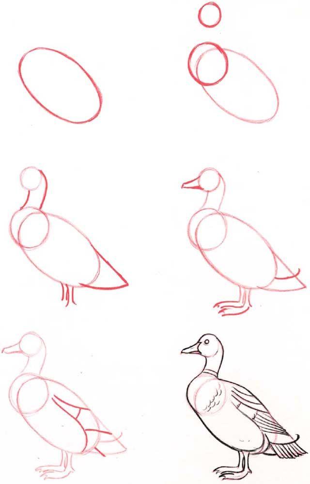 Varios animales - Aprender a dibujar animales de animes                                                                                                                                                                                 Más