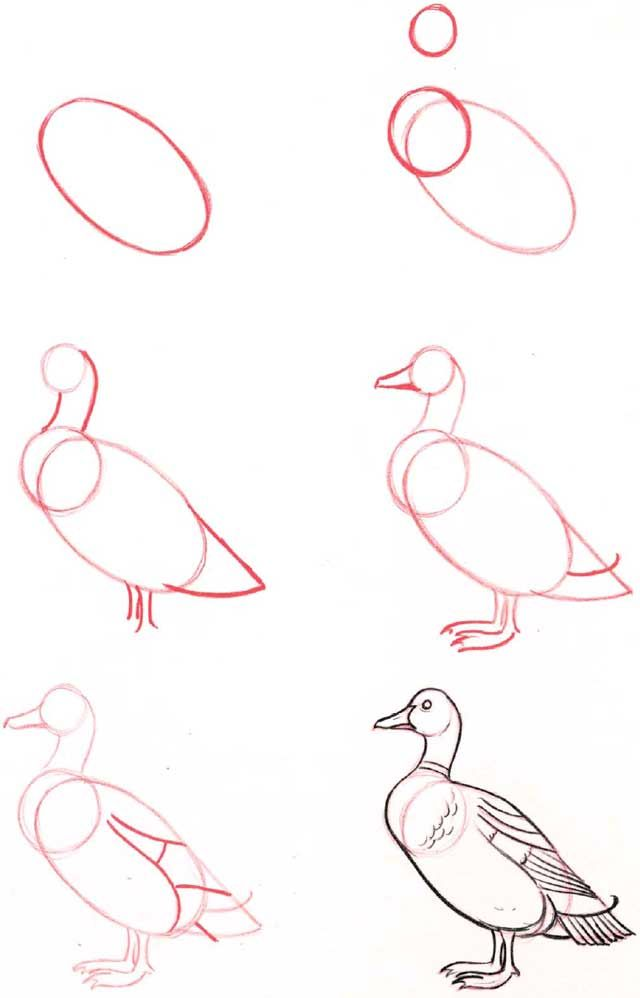 Learn to draw: Goose