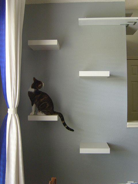 lack shelves for cats 2
