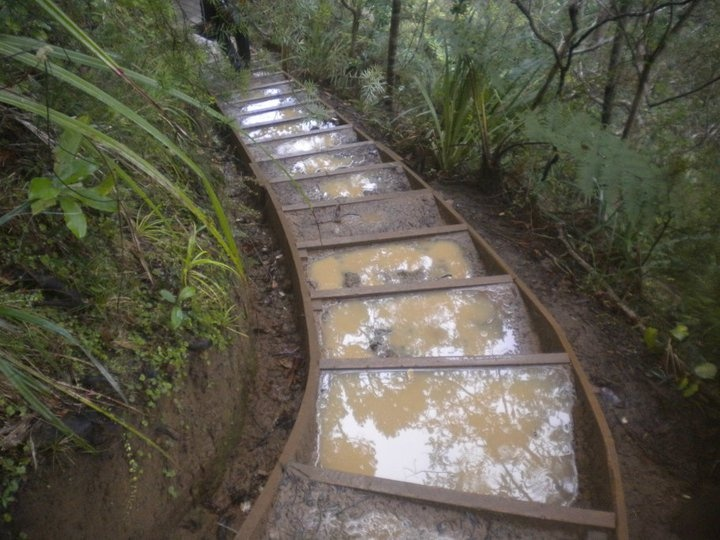 can't have a walk in the Waitakeres without a staircase to conquer, best done in dry weather