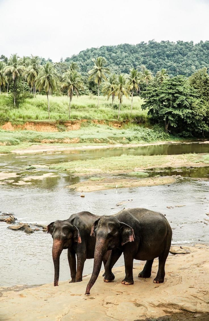 Guide: Pinnawala Elephant Orphanage