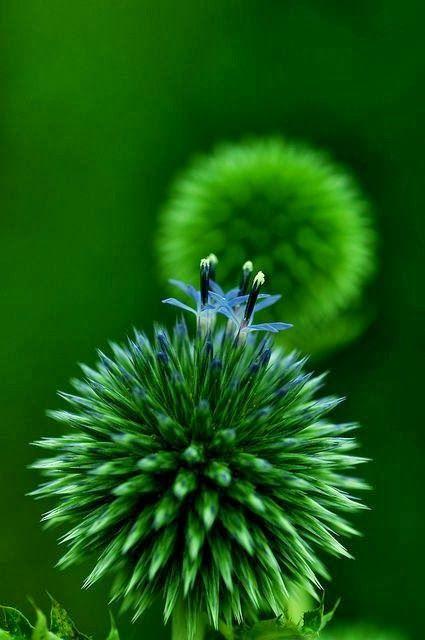 Green - Groen http://calgary.isgreen.ca/