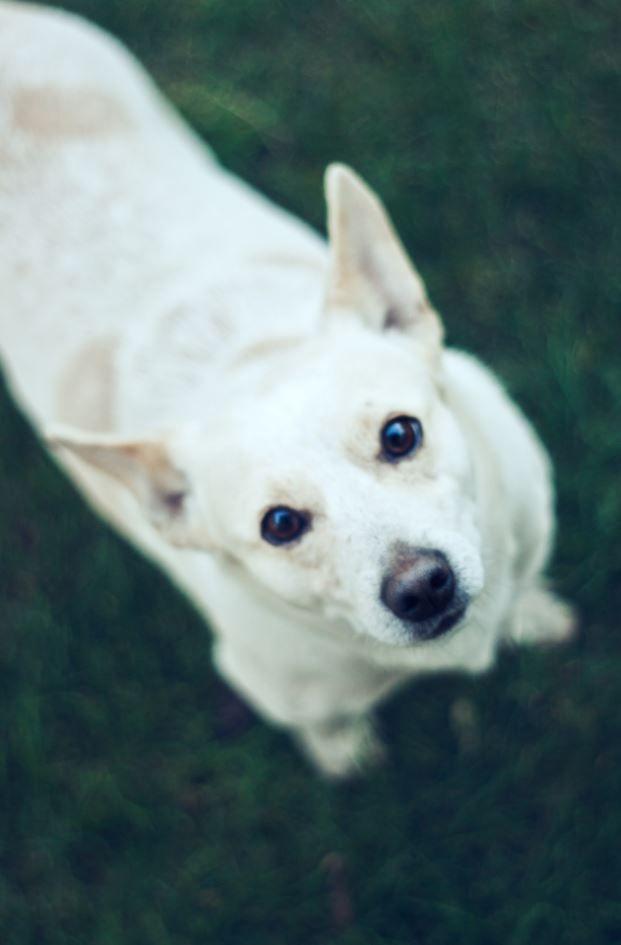 28 Most Adorable Dogs Of All Time Game Of Spoons Fotografias De Perros Fotos De Perros Imagenes De Perros