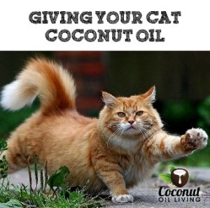 Great article: Coconut Oil for Cats?