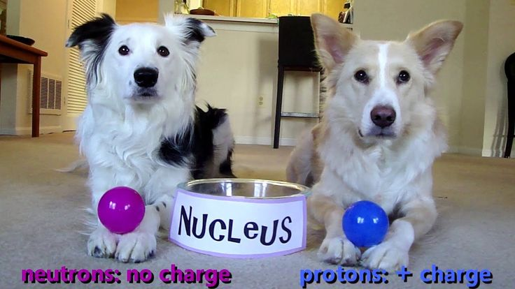 Some will surely think that Chemistry is one of the worst and most boring subjects in school. But if these adorable dogs are the ones that teach you, perhaps you would find Chemistry a more interesting subject and you will surely pay some attention in class! Watch the video below and see how interesting Chemistry is with the help …