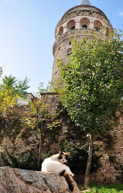 Galata Tower , Turkey