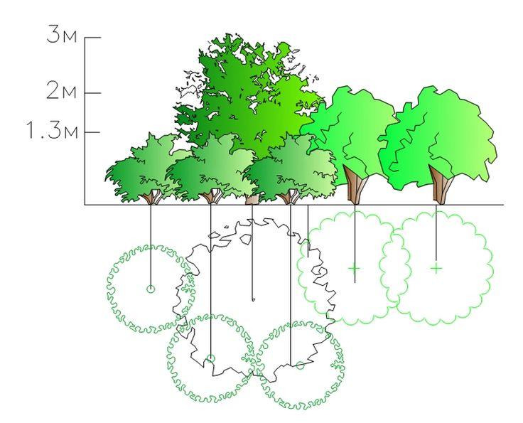 Если вы хотите, чтобы ваша дача из обыкновенного участка с высаженными на нем отдельными – пусть даже самыми красивыми! – растениями превратилась в замечательный, чудесный сад, то вам придется стать дизайнером и создать композиции из ваших растений, ...