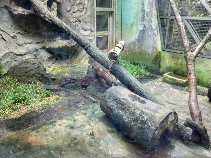 Hewan Luwak Kebun Binatang Ragunan