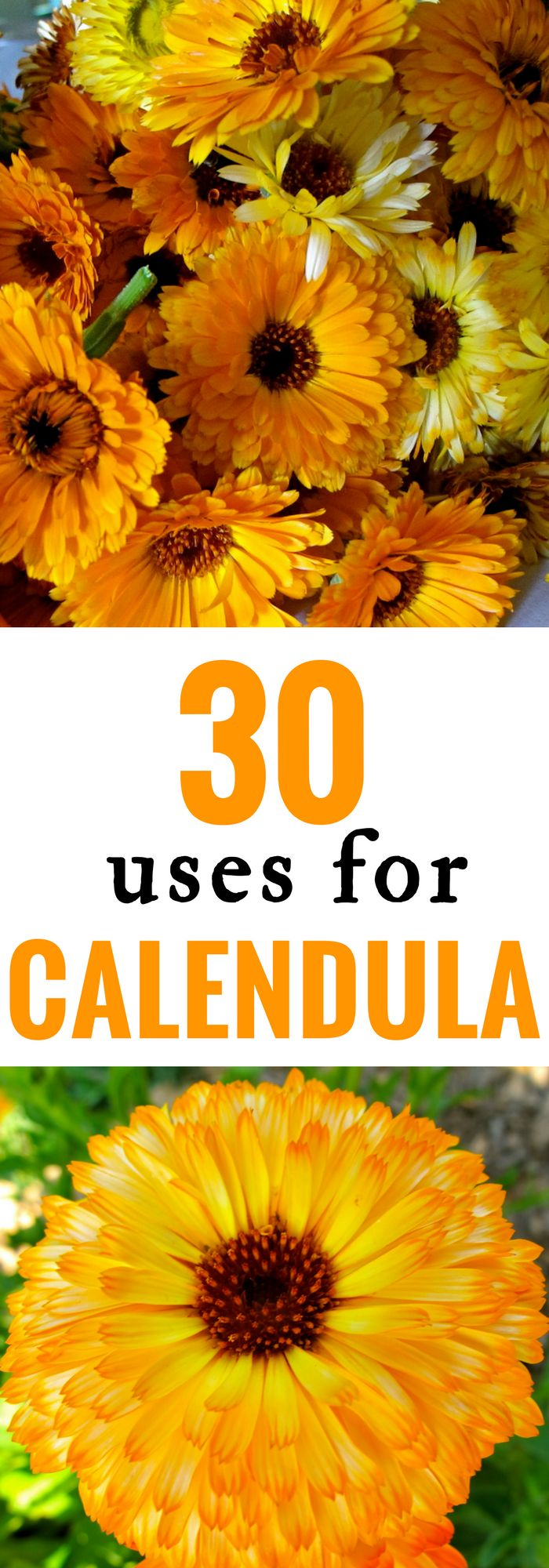 Natural Medicine | Herbs | Calendula is a wonderful healing herb that can treat and cure a variety of ailments and conditions. Here are just 30 Ways to Use Calendula