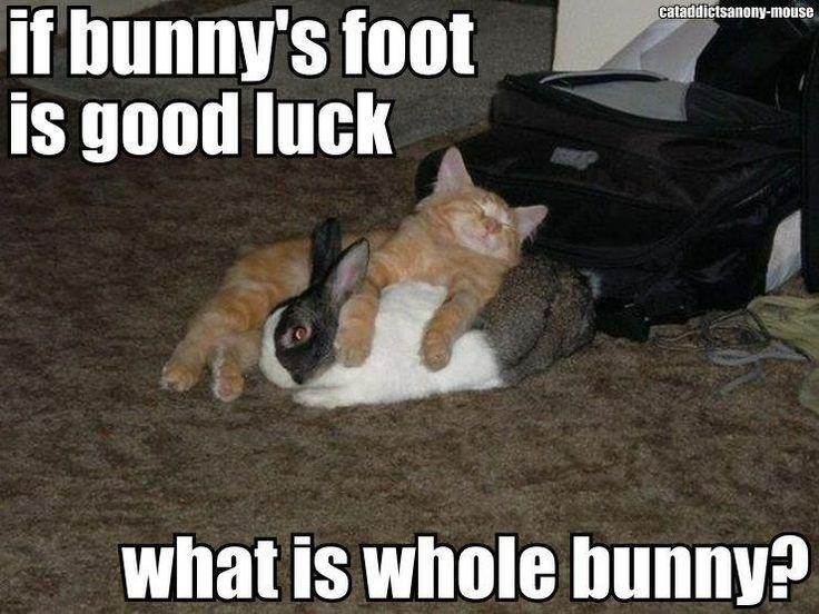 Funny White Cat Meme : Best images about kitten memes on pinterest cats