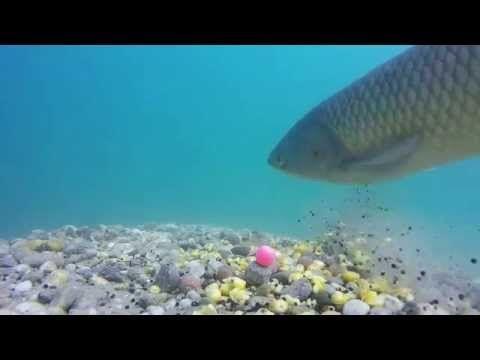 ▶ My carp fishing - YouTube