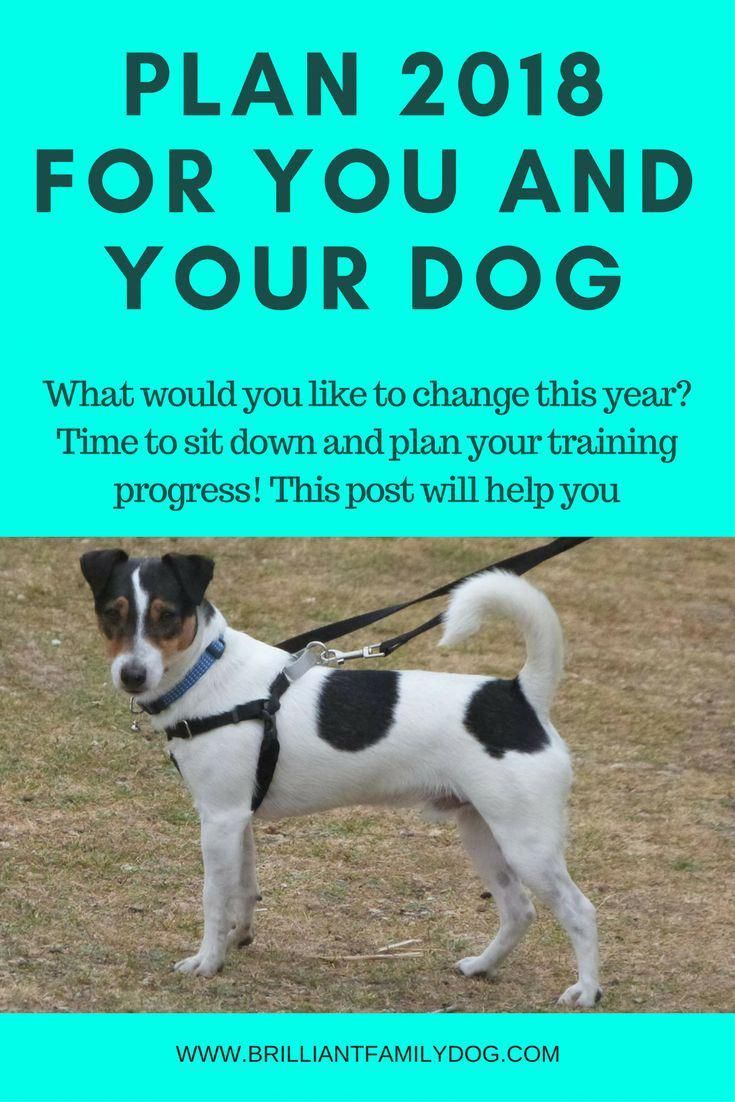 Dog Training Puppy Training New Puppy New Rescue Dog Plan