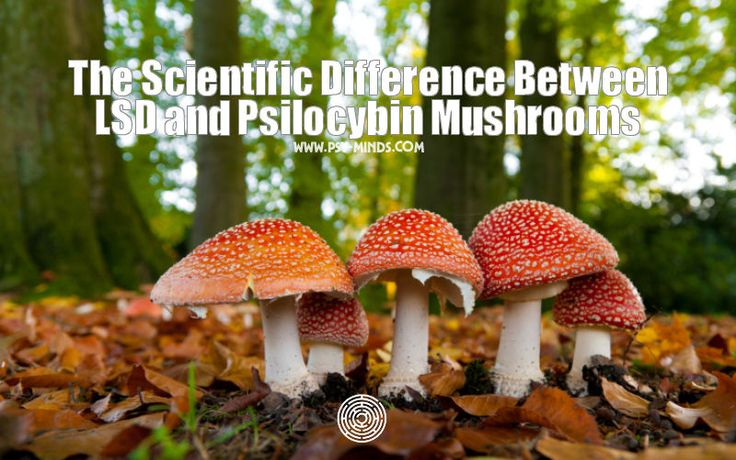 The Scientific Difference Between LSD and Psilocybin Mushrooms - @psyminds17
