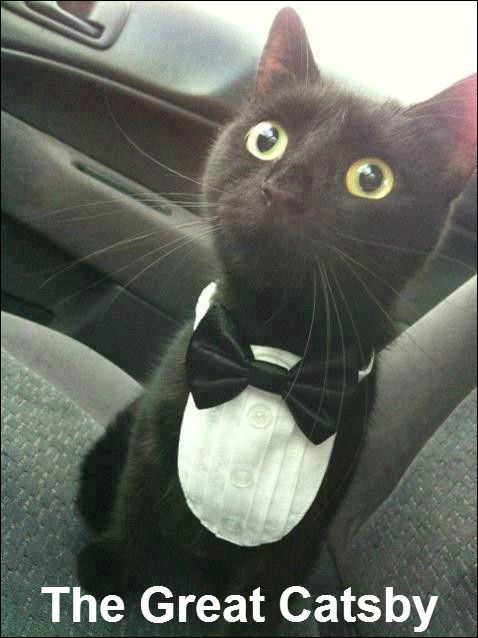 This cat and his spiffy formal wear. | Community Post: 44 Of The Most Important Black Cats In Black Cat History