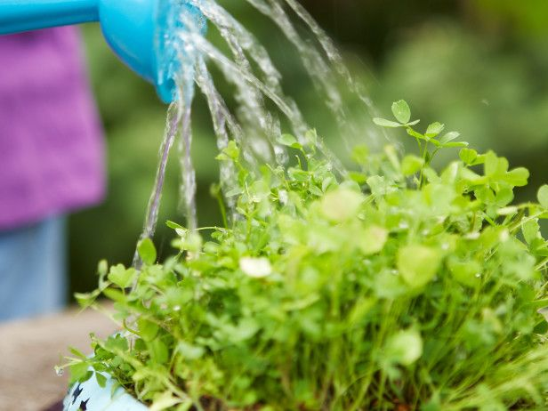 How to Grow Edible Grass For Your Pets --> http://www.hgtvgardens.com/life-style/how-to-grow-pet-grass?soc=pinterest