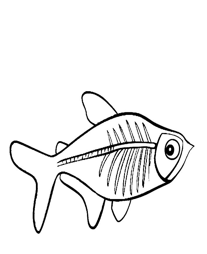 X Ray Fish Coloring Pages For Kids Printable