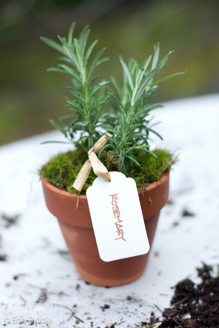 "Step-by-Step Guide to 4"" Herb Party Favors"