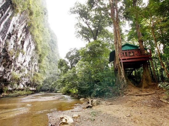 pictures of jungle houses | romance-tree-house-next.jpg