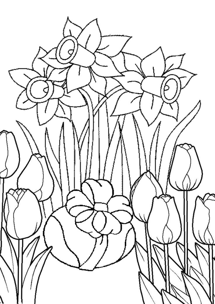 Раскраска нарциссы и тюльпаны