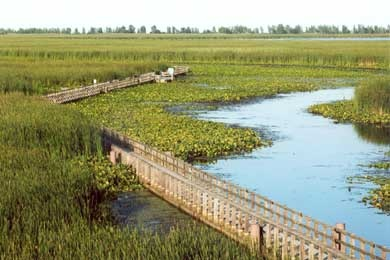 Marsh boardwalk, Point Pelee, Ontario - southernmost point in Canada and famous for birding and migrating Monarch butterflies