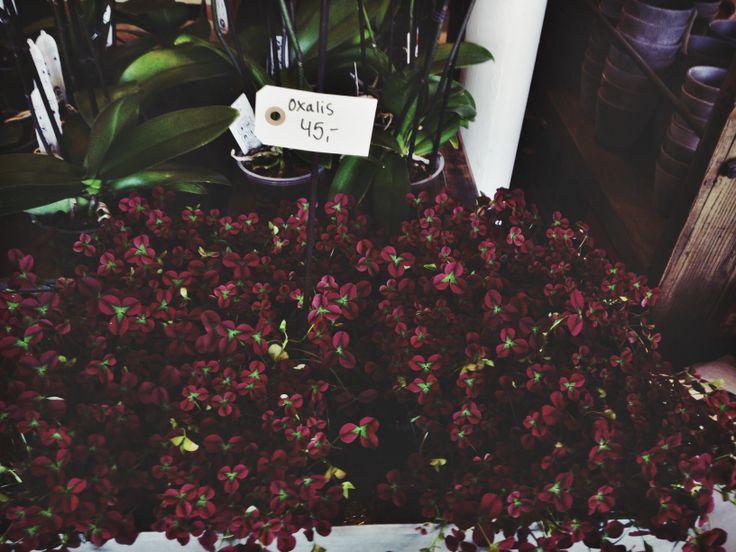 Florist's shop