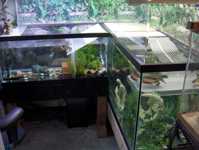 71 Best Images About Pets Turtles On Pinterest Indoor